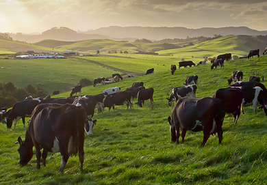 Working with industry-wide issues that affect today's price of a farm